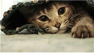 گربه ها با رفتارشان به ما چه می گویند