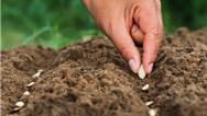 بذر هیبریدی چیست و چطور تولید میشود