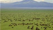 پارک ملی سرنگتی کجاست و چطور به آنجا سفر کنیم