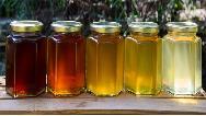 چطور عسل طبیعی را از عسل تقلبی تشخیص دهیم