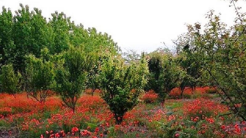 روستای اشپلا
